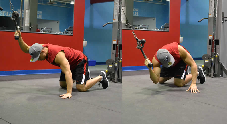 Cable Oblique Crunches Exercise - The Optimal You | Online ... Oblique Exercises Cable