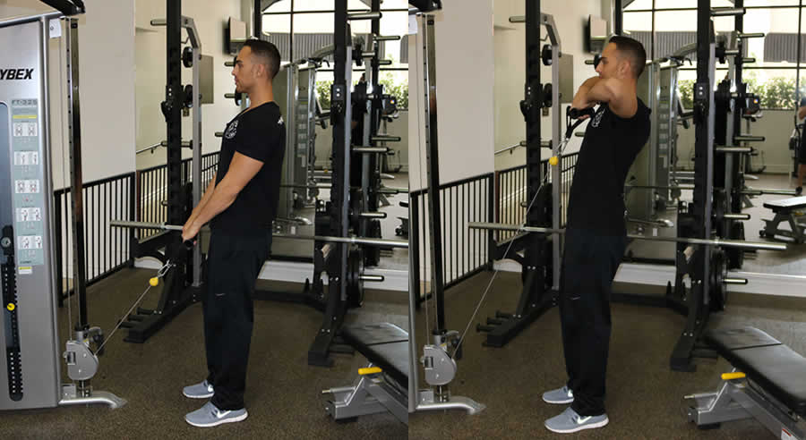 Image result for upright pulley rows