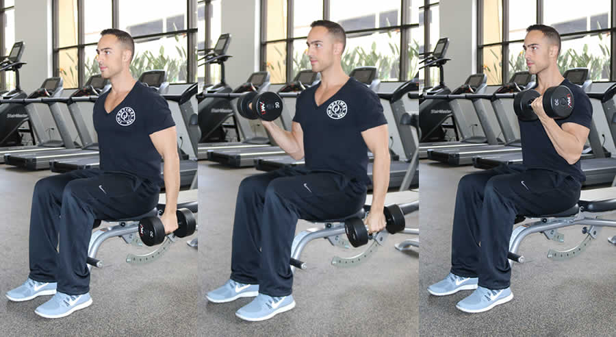 Seated Alternating Dumbbell Curl - The Optimal You | Online Personal