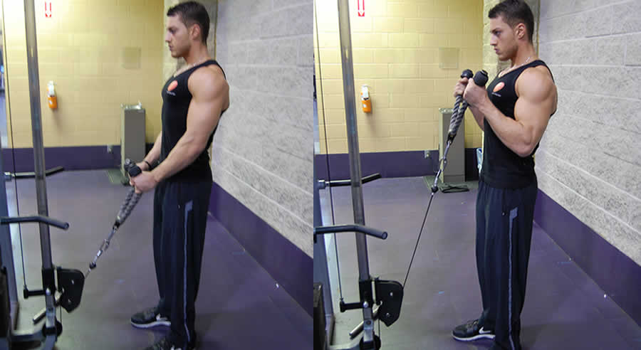 Cable Curl With Rope The Optimal You Online Personal