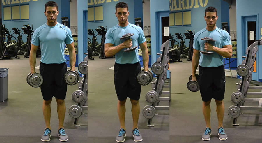 Cross Body Curl - The Optimal You | Online Personal Trainers
